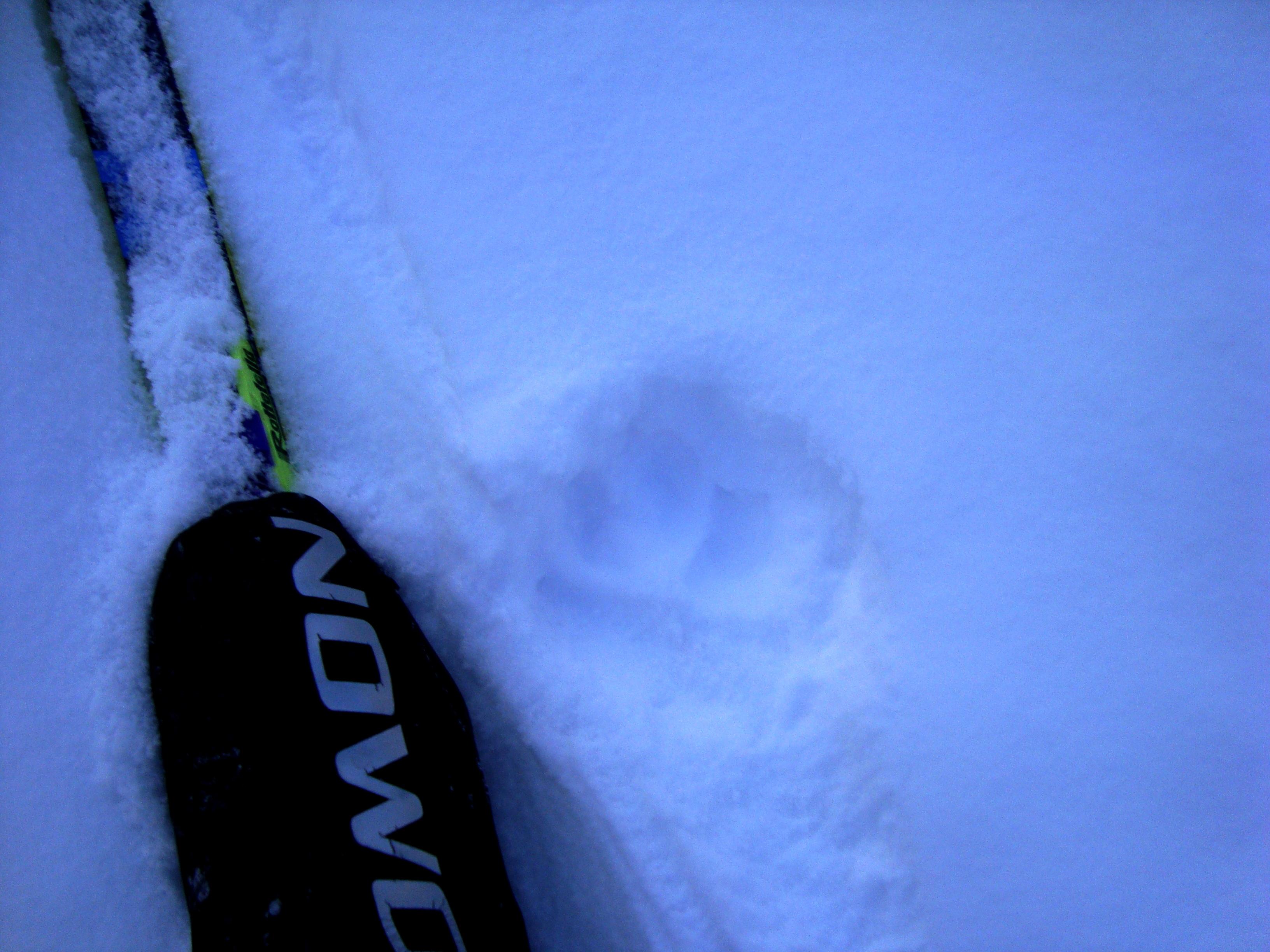 Animal tracks on Redearth Creek Dec 16, 2008
