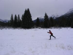 Skiing through Moose Meadows