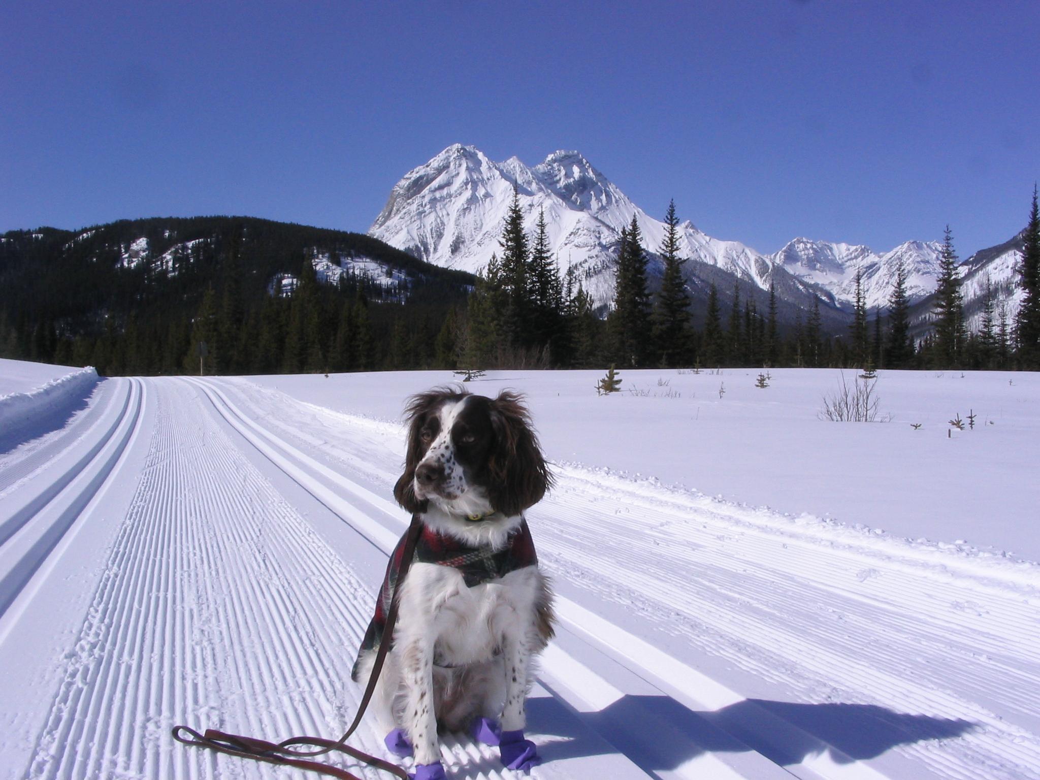 Tessa - ready to ski at Mt Shark Mar 11, 2009