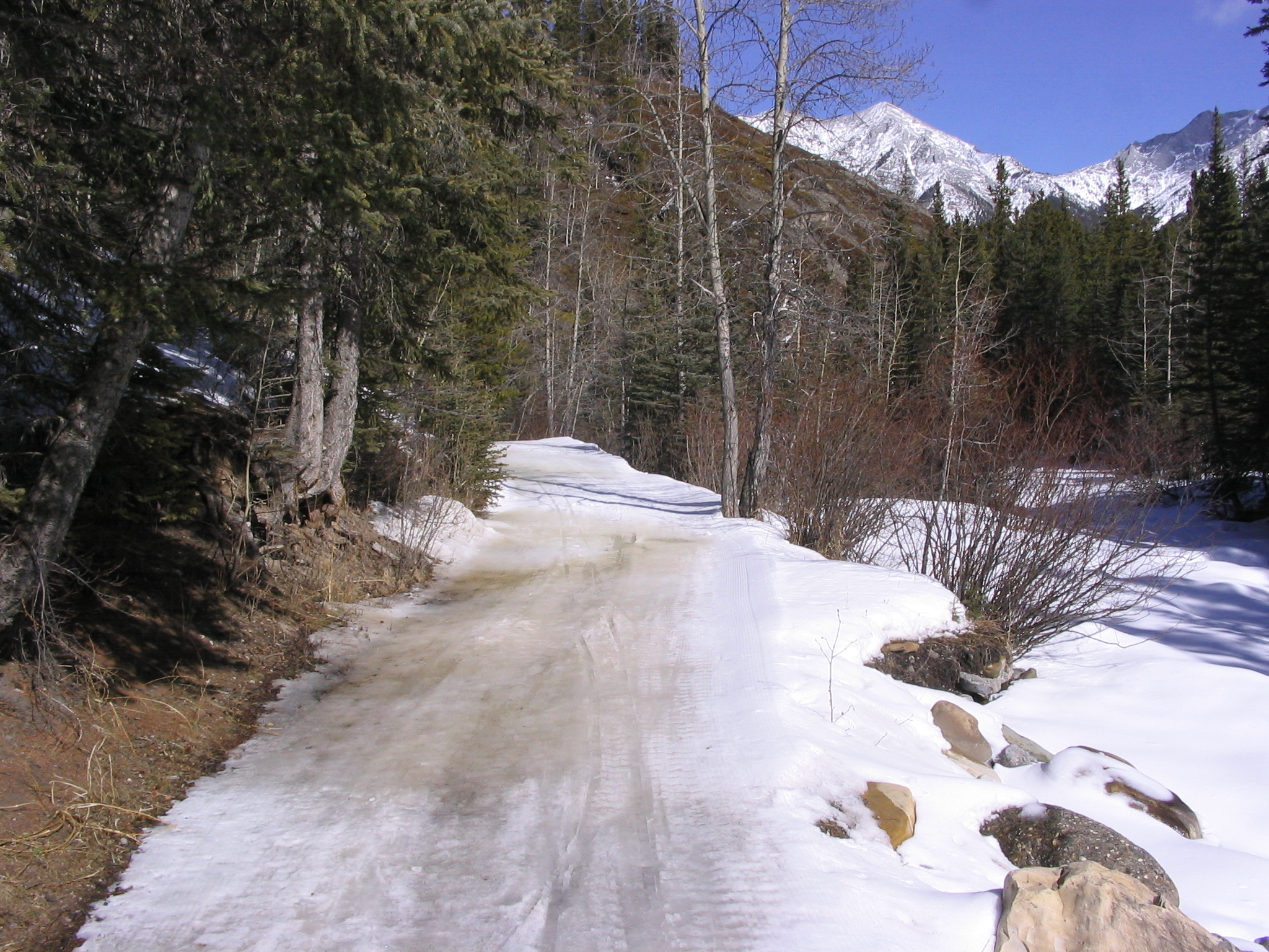 Ribbon Creek's melting snow Mar 19, 2009